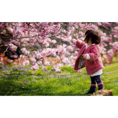 С 27 апреля по 6 мая в Японии выходные!